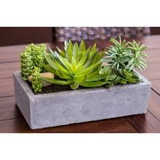 rectangular indoor plants you u0027ll love wayfair