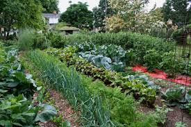 Vegetable Garden Layouts by Creative Large Diy Vegetable Garden With Various Plants Ideas