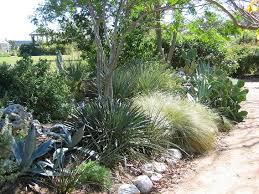 Texas Landscape Plants by Goundscape Solutions Native Texas Plants Xeriscape Have To Do
