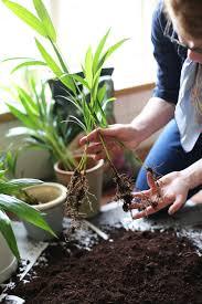 alys fowler u0027s guide to easy houseplant propagation bt