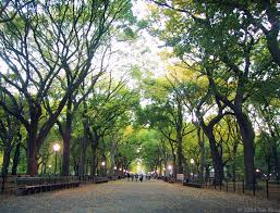 saturday in the park a stroll through the blogosphere tim l o