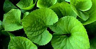 plants that don t need sunlight to grow researchers trick plants into growing without sunlight geek com