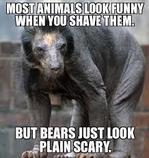 Funny Bear Meme - funny snake pics google search animal memes human ques pinterest