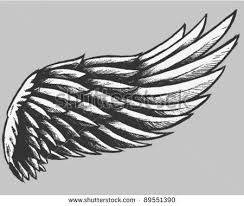 drawn wings eagle wing pencil and in color drawn wings eagle wing