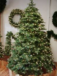 noble christmas tree christmas tree supplier