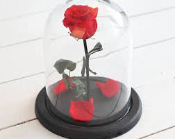 rose in glass beauty and the beast rose large mother s day gift