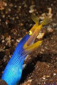 Seeking Eel 12 Best Garden Eel Images On Aquariums Fish Aquariums