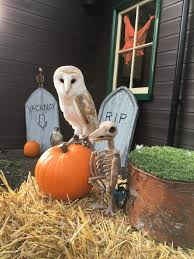 ghost and ghouls at tanfield railway durham falconry