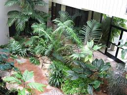 interior outdoor indoor plants decoration creating an indoor