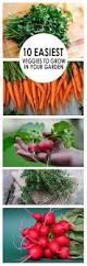 What To Plant In Your Vegetable Garden by 10 Easiest Veggies To Grow In Your Garden Gardening Hacks