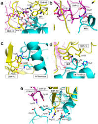 structural insights into the molecular mechanisms of myasthenia