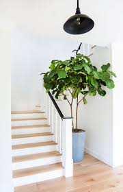 adorn our home potted outdoor ideas love this plants modern indoor
