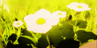 Japanese Language Of Flowers - project 17 anime amino