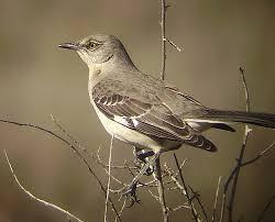 Backyard Song 44 Best Backyard Birds And Bird Accessories Images On Pinterest
