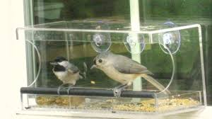 tufted titmouse and chickadee sunflower seed cracking technique