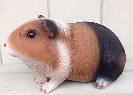 guinea pig tri coloured garden ornament arts indoor outdoor ebay