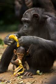 1296 best animals images on pinterest animals photos and nature