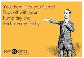 Hump Day Camel Meme - 15 happy hump day memes funny memes daily lol pics