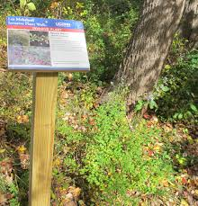 native plants of japan invasive plant walk connecticut invasive plant working group