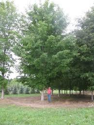 we sell treemendous trees treemendous