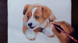 drawing animals 2 drawing puppy colored pencils