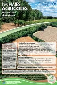 chambre agriculture 34 les haies agricoles intérêts choix et plantation chambre d