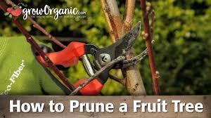 fruit tree garden layout how to prune fruit trees organic gardening blog
