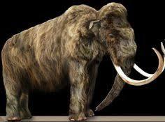 mammoth hard walked earth lead