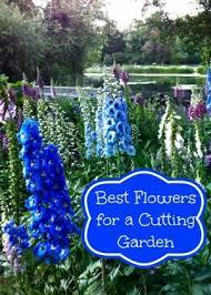 best 25 flowers for cutting garden ideas on pinterest cut