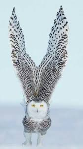 best 25 white owls ideas on pinterest snowy owl owls and baby owls