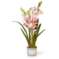 orchid flowers 28 light pink orchid flowers national tree company target