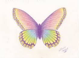 drawing butterflies with colored pencils 18 butterfly drawings