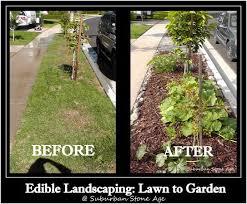 edible landscaping converting a lawn to garden