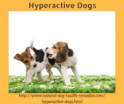 hyperactive dogs hyperactive dogs symptoms and causes