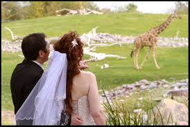 phoenix zoo lights members only weddings phoenix zoo