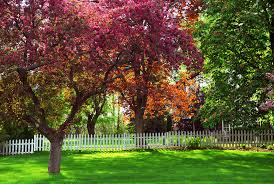 tree services fast growing trees reliable tree care utah