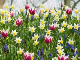 plant a bed of spring bulbs hgtv