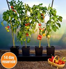 Self Watering Patio Planters by Self Watering Tomato Planter