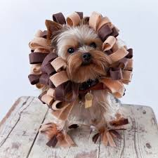 small dog witch costume diy pet costume ideas popsugar smart living
