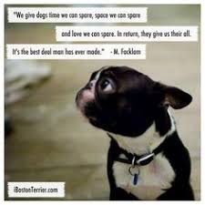 Boston Terrier Meme - leo the lionhearted the little red boston terrier that could