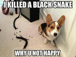 Dog Jokes Meme - dog meme s jokes never ending threads husky owners the