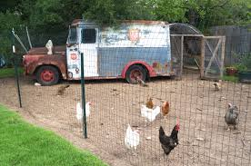 austin backyard chickens antibiotic free meat why to care and where to find it u2013 kelly