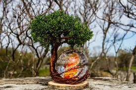 cremation tree ponderosa tree of with burning bush orb by