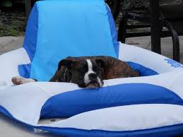 8 month old boxer dog weight boxer dog weight 8 months your handy dog age calculator a