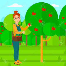 a woman holding a basket and collecting apples in fruit garden