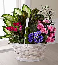funeral plants funeral plants ftd flowers roses plants and gift baskets