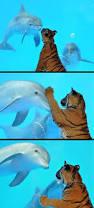 best 25 dolphins ideas on pinterest water animals bottlenose
