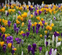 first signs of spring at rhs garden wisley part two lisa cox