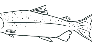 salmon fish coloring page salmon coloring page salmon coloring page fish coloring page salmon