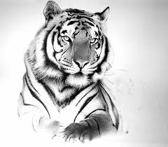 black and grey bengal tiger design